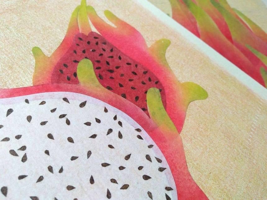 tropical fruits illustration_Yodchat Bupasiri_ยอดฉัตร บุพศิริ18