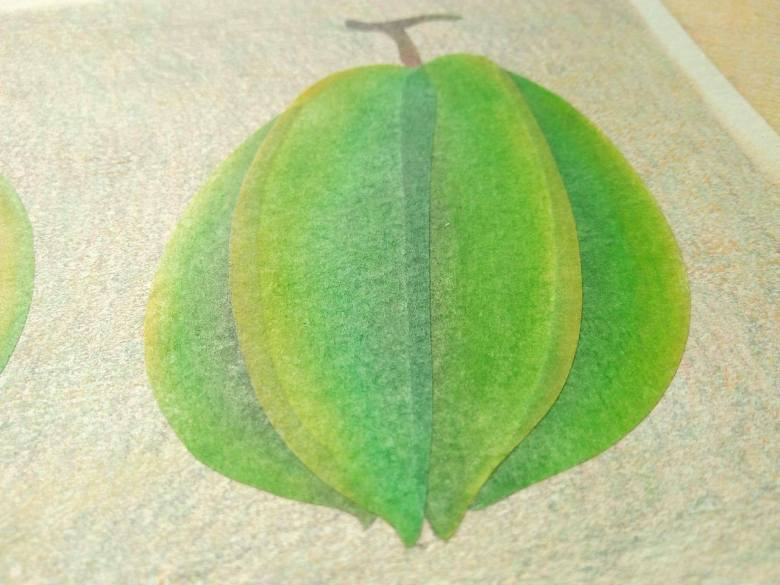 tropical fruits illustration_Yodchat Bupasiri_ยอดฉัตร บุพศิริ21