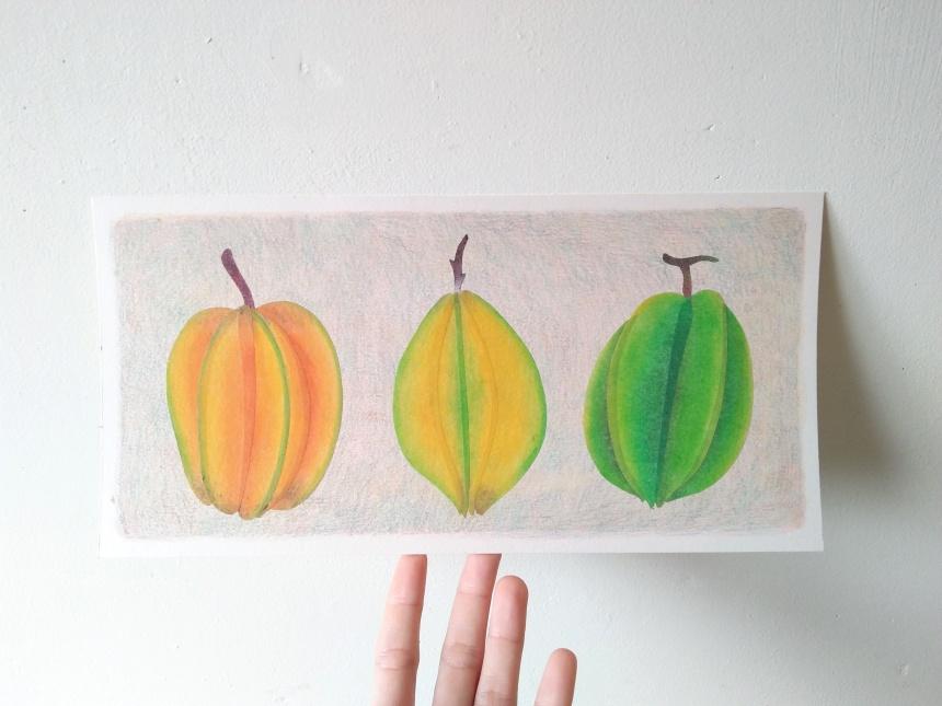 tropical fruits illustration_Yodchat Bupasiri_ยอดฉัตร บุพศิริ7